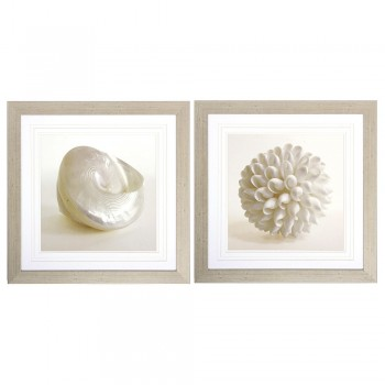 Shell 2 Piece Framed Photographic Print Set